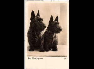 DR 1938, Hunde AK m. 6 Pf. u. Landpost Stpl. Maihingen über Nördlingen