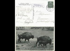 DR 1934, Landpost Stpl. Jagdschloß Saupark ü. Elze auf Tierpark AK m. 6 Pf.