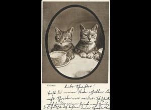 Dejeuner, Katzen m. Teetassen, 1904 gebr. Tier AK