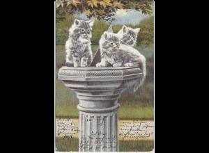 Katzen auf Gartensäule, 1905 gebr. Tier AK