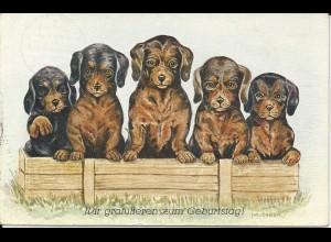 5 Hunde in Kiste, 1929 gebr. Glückwunsch Tier AK